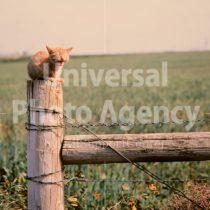 アメリカ サンフランシスコ 草原のねこ / sfcat01-92