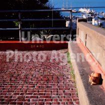 アメリカ サンフランシスコ 遠くに海をのぞむ陽だまりねこ / sfcat01-93