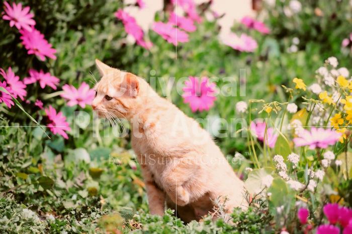 アメリカ サンフランシスコ 花とねこ / sfcat01-94
