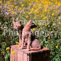 アメリカ サンフランシスコ 花とねこ / sfcat01-95