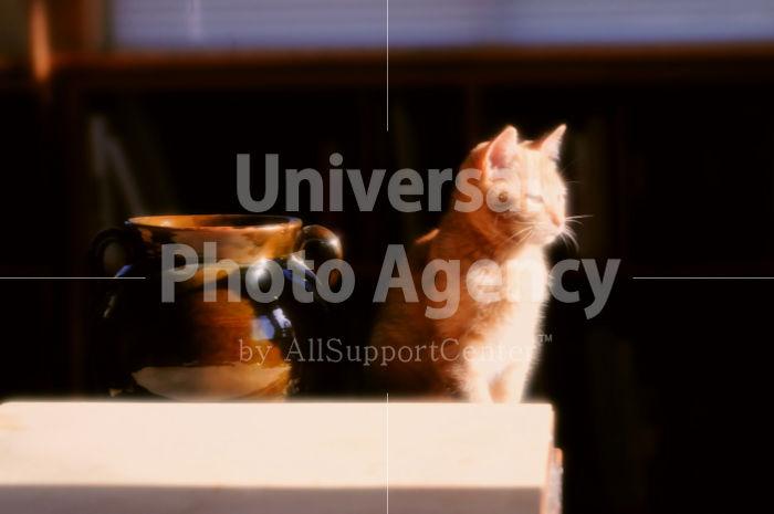 アメリカ サンフランシスコ 陽だまりと花瓶とねこ / sfcat01-96