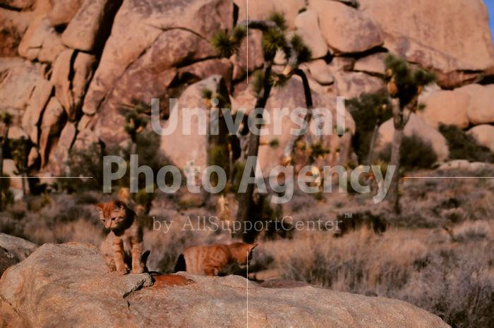 アメリカ サンフランシスコ 砂漠に同化するネコ / sfcat01-98
