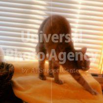 アメリカ サンフランシスコ 伸びをする猫 / sfcat01-9